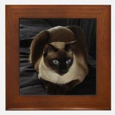 Lulú, the Siamese Cat Framed Tile