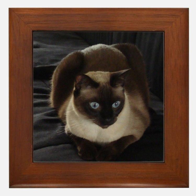 Lulú, the Siamese Cat Framed Tile