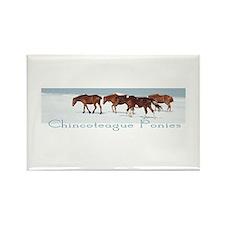 Chincoteague Ponies Rectangle Magnet