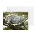porcupine 2 Greeting Cards (Pk of 10)