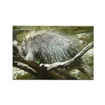 porcupine 2 Rectangle Magnet
