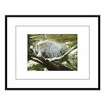 porcupine 2 Large Framed Print