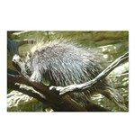porcupine 2 Postcards (Package of 8)