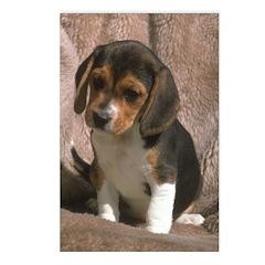 Beagle Puppy Dog Photo Card Postcards 8