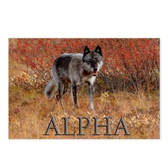 Alpha Postcards (Package of 8)