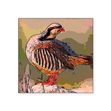 "partridge -  official bird  Square Sticker 3"" x 3"""