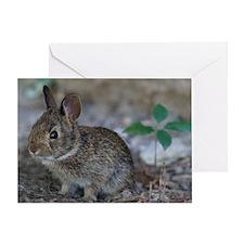 Bunny Baby Greeting Card