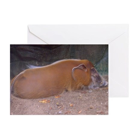 red river hog Greeting Cards (Pk of 10)