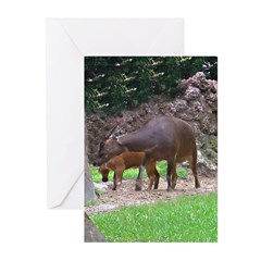anoa Greeting Cards (Pk of 10)