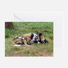 wild dog Greeting Cards (Pk of 10)