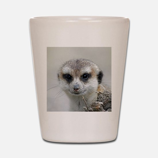 Meerkat001 Shot Glass