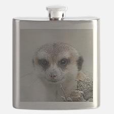 Meerkat001 Flask