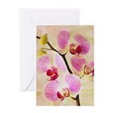 Orchid Greeting Cards