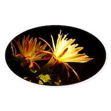 Cereus Cactus Blossoms Oval Decal