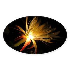 Cereus Cactus Blossom Oval Decal