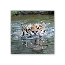 """Tiger005 Square Sticker 3"""" x 3"""""""