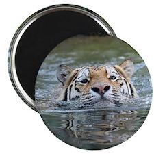 Tiger005 Magnet