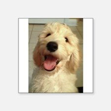 Happy Goldendoodle Sticker