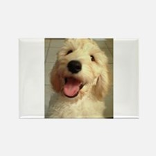 Happy Goldendoodle Magnets