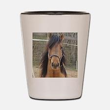 Kiger Stallion Shot Glass