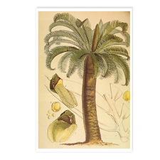 Encephalartos_longifolius Postcards (Package of 8)