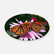 Monarch Butterflies Oval Car Magnet
