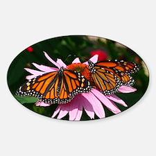 Monarch Butterflies Sticker (Oval)