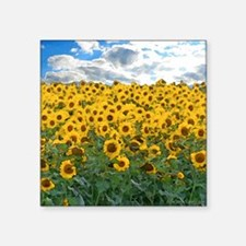 Sunflower Field shwr Sticker