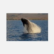 Humback Whale breach Rectangle Magnet