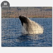 Humback Whale breach Puzzle