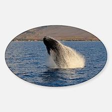 Humback Whale breach Decal