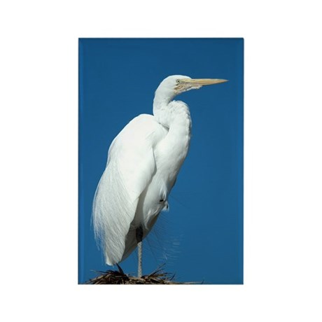 Great Egret Rectangle Magnet