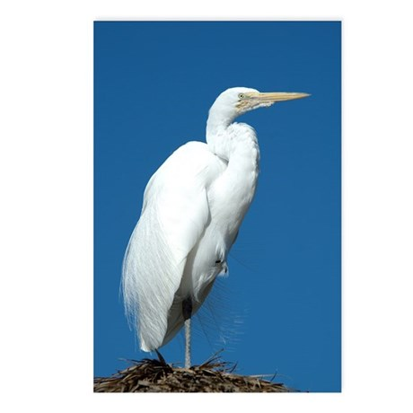 Great Egret Postcards (Package of 8)