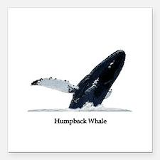 "Humpback Whale (breaching) Square Car Magnet 3"" x"