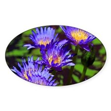Blue Water Lily Decal