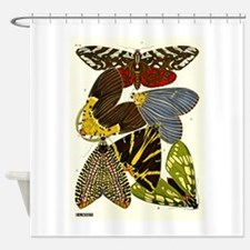 Antique French 1920 Seguy Moths Print Plate 14 Sho