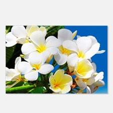 Plumeria Postcards (Package of 8)