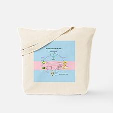 Angiosperm life cycle Tote Bag