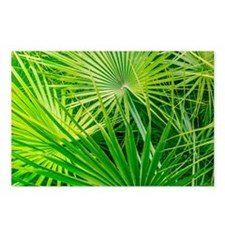 Fan Palm Forest Postcards (Package of 8)