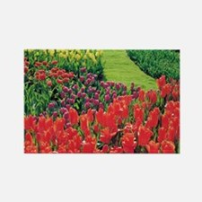 Field of Tulips - Netherlands Rectangle Magnet