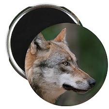 Wolf014 Magnet