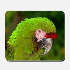 Military macaw Mousepad