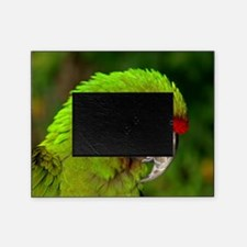 Military macaw Picture Frame