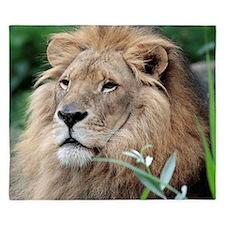 Lion010 King Duvet