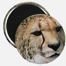 Cheetah006 Magnet