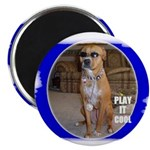 PLAY IT COOL (PIMP DAWG) Magnet