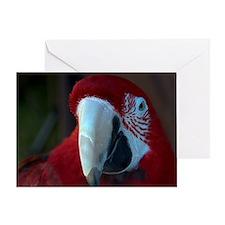 Green Wing macaw Greeting Card