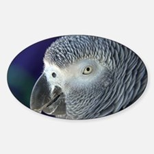 African Gray Decal