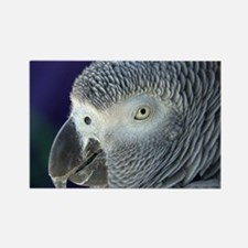 African Gray Rectangle Magnet