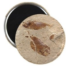 "Fish Fossil 2.25"" Magnet (10 pack)"
